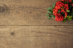 Pyracantha Concept Stock Images