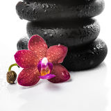 Pyramid of black zen stones and red orchid, phalaenopsis on whit Stock Photography