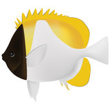 Pyramid butterfly fish Stock Photography
