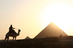 Pyramid and camel rider Stock Images