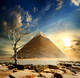 Pyramid and dry tree Stock Photography