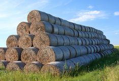 Round hay bales Royalty Free Stock Image