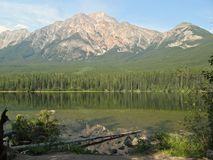 Pyramid Lake and dead tree 2 Royalty Free Stock Photo