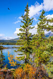 Pyramid Lake among tall firs Stock Photo