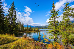 Pyramid Lake among the tall pines and firs Royalty Free Stock Photography