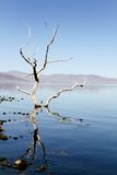 Pyramid Lake Tree Stock Images