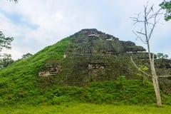 Pyramid of Mundo Perdido. Mayan Pyramid in Guademala. Pyramid of Mundo Perdido Royalty Free Stock Images