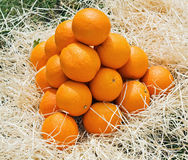 Pyramid of oranges Stock Photography