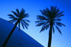 Pyramid and Palm Trees stock image