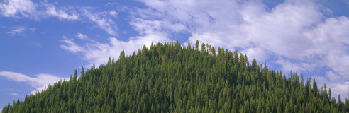 Pyramid of Pines,. Smith Ferry, Idaho Royalty Free Stock Photos