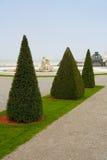 Pyramid shaped trees Stock Photos