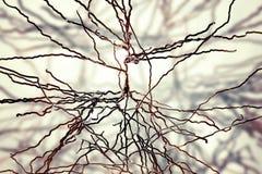 Pyramidal нейроны, клетки человеческого мозга иллюстрация штока