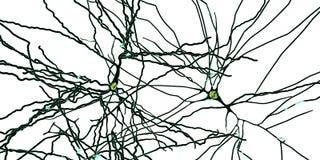 Pyramidal нейроны, клетки человеческого мозга иллюстрация вектора