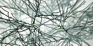 Pyramidal нейроны, клетки человеческого мозга бесплатная иллюстрация