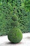 Pyramidalt träd Arkivfoto