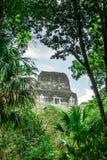 Pyramide dans la jungle par Tikal - le Guatemala photos libres de droits