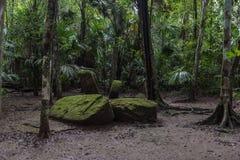 Pyramide et le temple en parc de Tikal Objet guidé au Guatemala avec les temples maya et les ruines de cérémonial Tikal est un an Photos libres de droits