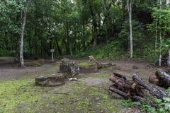 Pyramide et le temple en parc de Tikal Objet guidé au Guatemala avec les temples maya et les ruines de cérémonial Tikal est un an Photo libre de droits