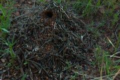 Pyramide für Ameisen lizenzfreie stockfotografie
