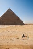 Pyramide Khafre de Giza de conduite de chameau Image libre de droits