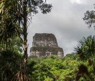 Pyramiden och templet i Tikal parkerar Sightobjekt i Guatemala med Mayan tempel och ceremoniel fördärvar Tikal är ett forntida arkivfoto