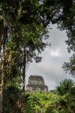 Pyramiden och templet i Tikal parkerar Sightobjekt i Guatemala med Mayan tempel och ceremoniel fördärvar Tikal är ett forntida fotografering för bildbyråer