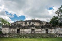 Pyramiden och templet i Tikal parkerar Sightobjekt i Guatemala med Mayan tempel och ceremoniel fördärvar Tikal är ett forntida royaltyfri bild