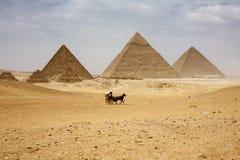 Pyramiderna av Giza royaltyfria bilder