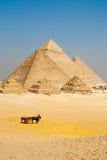 Pyramides égyptiennes Giza de touristes Images stock