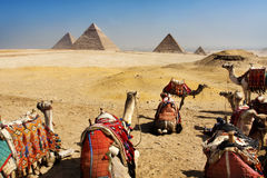 Pyramides de Giza, le Caire, Egypte Photos stock