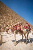 Pyramides des pharaons à Gizeh Photos libres de droits