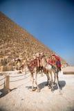 Pyramides des pharaons à Gizeh Photographie stock