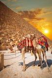 Pyramides des pharaons à Gizeh Image libre de droits