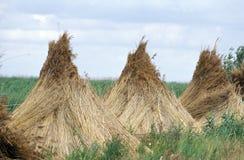 Pyramides des Schilfs Stockfoto