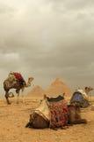 Pyramides et chameaux photographie stock