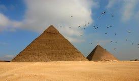 Pyramides et oiseaux de l'Egypte images libres de droits