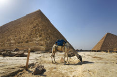 Pyramids. In Giza, Cairo, Egypt Royalty Free Stock Photo