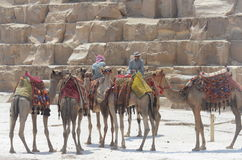 Pyramids Cairo Egypt Royalty Free Stock Photography