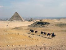 Pyramids and camels stock images