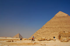 Pyramids and camels Royalty Free Stock Images