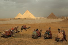 Pyramids and camels Royalty Free Stock Image