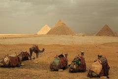 Pyramids and camels Royalty Free Stock Photos