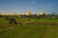 Pyramids of Egypt. Distant view of the Pyramids of Giza, Egypt.  Green field and tree line in foreground, blue sky with sporadic clouds above Royalty Free Stock Photography