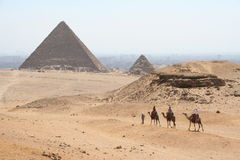 The pyramids in gaza. Camel in front of The pyramids of gaza in egypt Stock Images