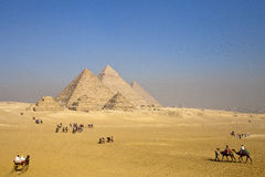 Pyramids Giza Plateau Cairo. Camels, horses, birds, join in the fun together with pyramids royalty free stock images