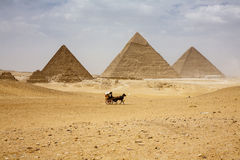 The Pyramids of Giza. The Pyramids plateau is dominated by the massive pyramids of Khufu (Cheops), Khafre (Chephren), and Menkaure (Mycerinus), all of whom ruled Royalty Free Stock Images