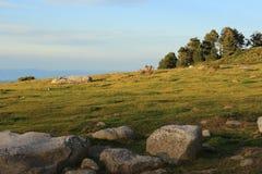 Pyrenean äng i Aude Royaltyfri Fotografi