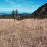 Pyrenean äng i Aude Fotografering för Bildbyråer