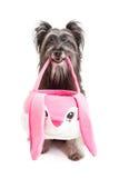 Pyrenean σκυλί ποιμένων που κρατά ένα καλάθι Πάσχας Στοκ φωτογραφία με δικαίωμα ελεύθερης χρήσης