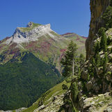 Pyrenean Estampa Stock Foto
